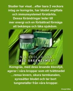 Korngräs