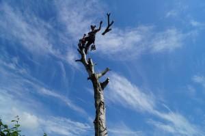 Ystad Trädvård